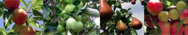 city fruit
